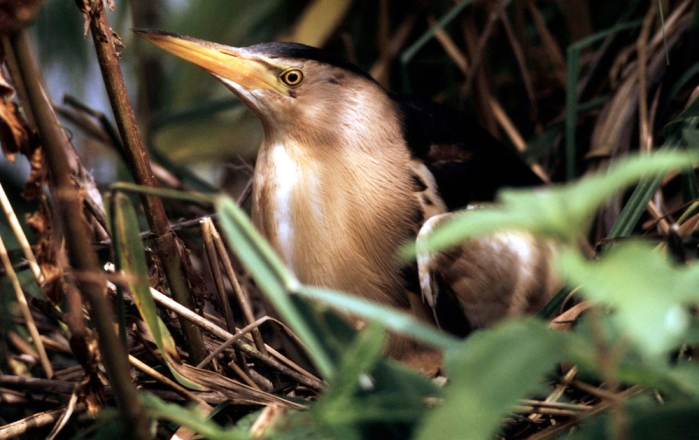 Fot: Fred F. Hazelhoff, WWF